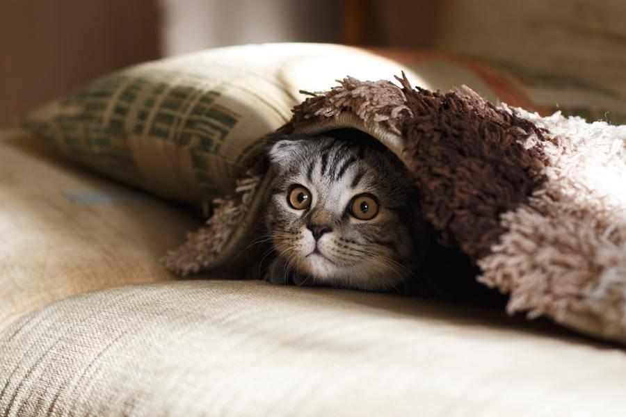 小猫掩藏在格子花呢披肩下,亿欧智库,它经济,宠物