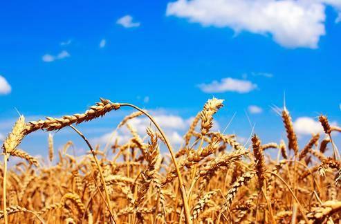 疫情会引爆全球粮食危机吗?