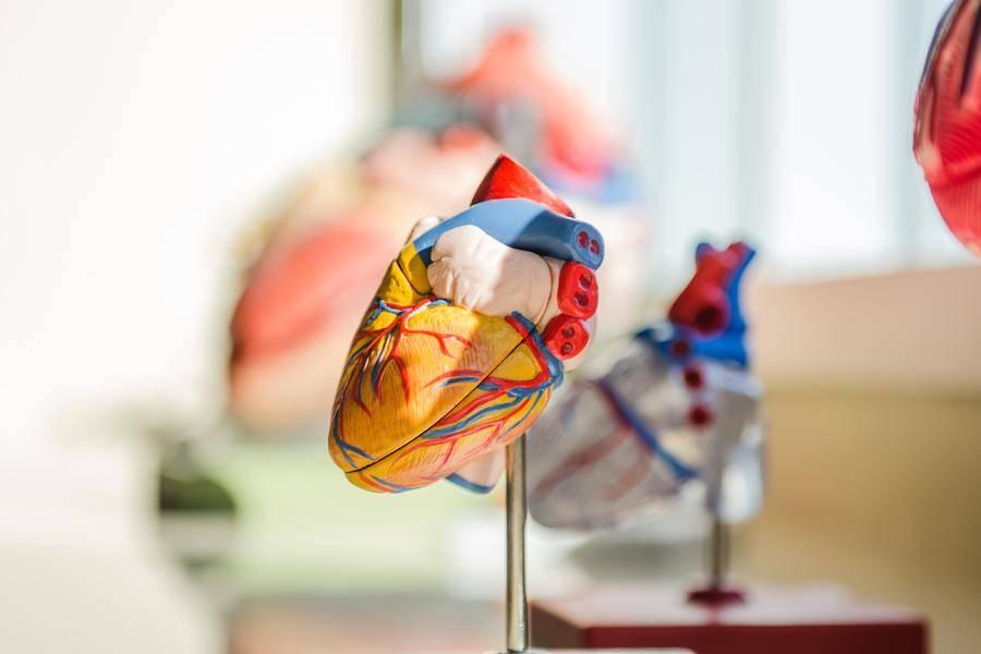 心脏,TAVR,爱德华生命科学,经导管主动脉瓣置换术