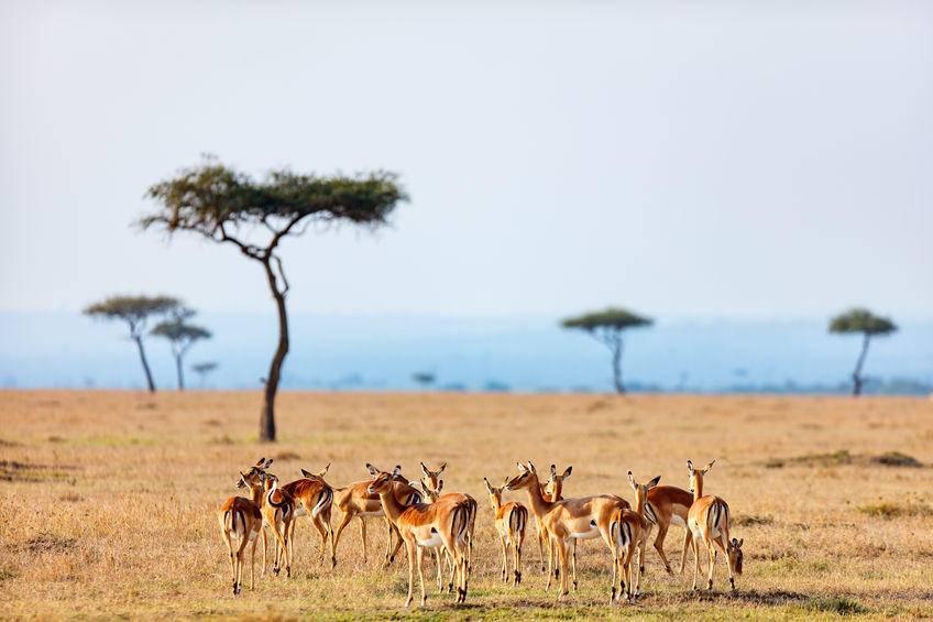 非洲十国创投市场调研报告之:(10)坦桑尼亚