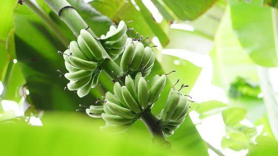 Tropic Biosciences获B轮融资