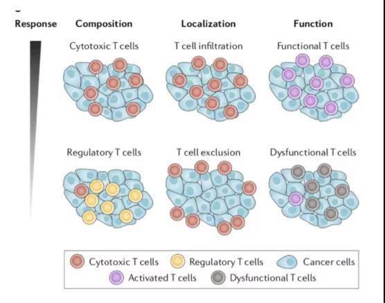 癌症免疫微环境
