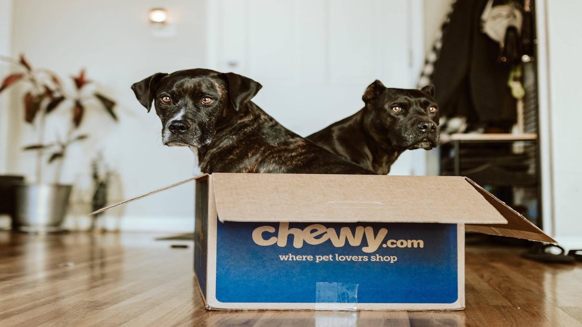 【亿欧智库】无出其右,宠物电商佼佼者——Chewy 案例研究